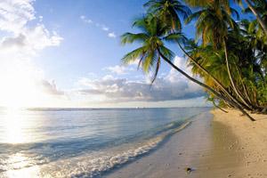 beach2_skinmite